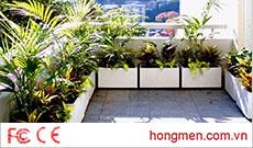 Những loại cây thích hợp trồng ở lan can chung cư